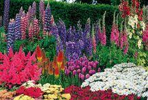 Jardins, fleurs...