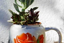 Flora / Pragtige plante regoor ons mooie Suid-Afrika!