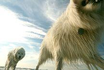 dogs <3 / by Liz Byers