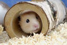 B&B Pet Stop: Small Animals