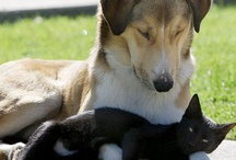 animals :D