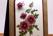 SU Sweetbriar Rose