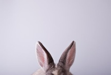 Nonsense / ...and bunnies! / by Heather Grace