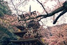 Spring Time in Japan ✿