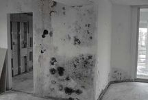 Illinois Mold Removal / by Gianna