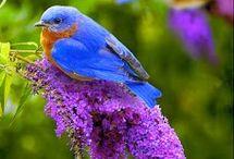 Colors animals