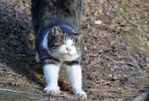 Cat-猫-