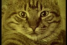 Pati the Cat