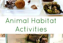 Animals for preschool