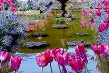 Ogrody / O mojej pasji ,która jeszcze dojrzewa .... wraz ze mną :) Uwielbiam Panią Przyrodę i jej umiłowanie ...do ogrodów