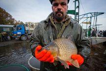 Freshwater and saltwater fish - fishing / Freshwater and saltwater fish - fishing