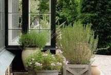 Dream House - Garden & Outdoor