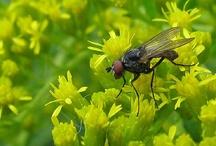 Garten: Insekten, Tiere