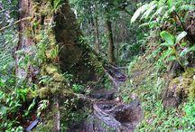 Reizen: Costa Rica / Regenwoud Monteverde