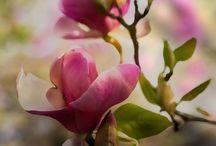 flora / flowers