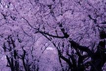natura violet