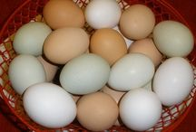 Chickens: Eggs and Feed / by Julie Ireland