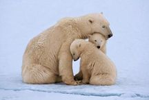 Animals.Bear
