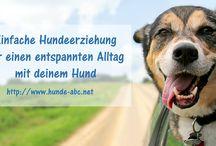 http://hunde-abc.net/