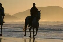 Sport in Noordhoek / Horse-riding on Noordhoek Beach is one of the most popular activities for visitors and residents alike. Surfing or kite-surfing are perennial favourites but for the less active a walk on the beach is a sought after activity.