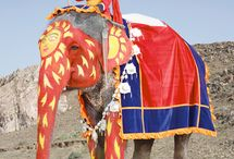 sultans elephant