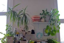 plants for the home / by Lindsy Neely