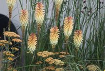 Plant Passion