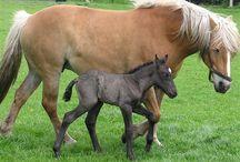 paarden / i love paarden