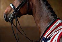 Horses' / by Kim Jenks