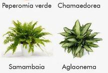 plantas que limpam o ar de sua casa