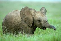Elephant love... / by April Hegdale