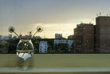 Dandelions. / Photos of the most air flowers - dandelions