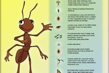 Brownie Bug Badge
