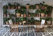 Zimmerpflanzen-Ideen