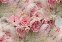 Roses, Flowers, vintage