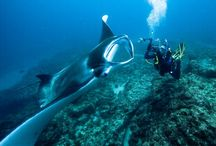 Straddie Scuba Diving / The diving on North Stradbroke Island is absolutely second to none. Come over and check out this under water wonderland for yourself. It has to be seen to believed