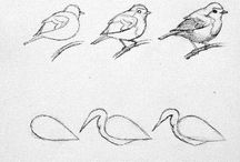 Bird Drawings