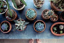 •Nature//Plants