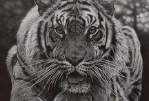 Teckning djur