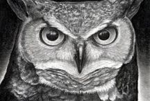 Owls - my love