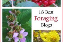 Foraging foods in Asheville / Nature Nerds, Botanist, Chef's what's for dinner?