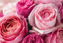 Roses (güller)