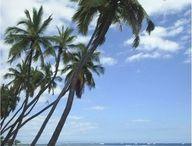 Hawaii / by Gina Heck