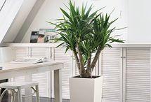 Plantas para ambiente interno / Plantinhas dentro de casa alegram o ambiente, purificam o ar e ajudam na decoração. Mas é preciso saber quais são as melhores espécies para ambientes internos.