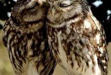 gufi / adoro questi meravigliosi animali