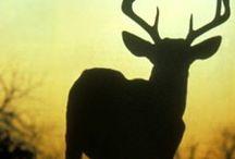 I love hunting!!!!!