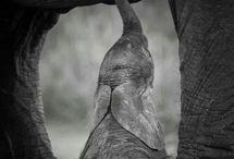 Elephants / God help save our elephants