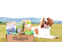 Dogs and Treats / All about dogs, puppies and treats!