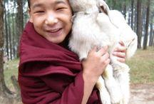 humans/nature/buddhism
