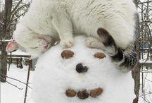 Zwierzęta w zimie :) / Winter animals